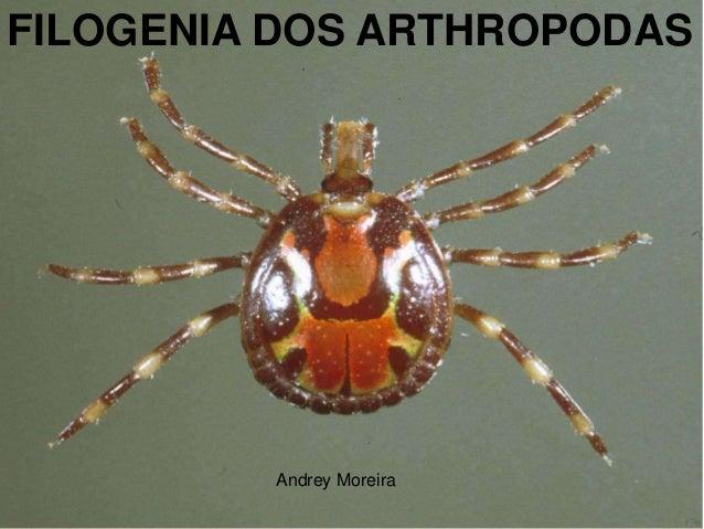 FILOGENIA DOS ARTHROPODAS         Andrey Moreira