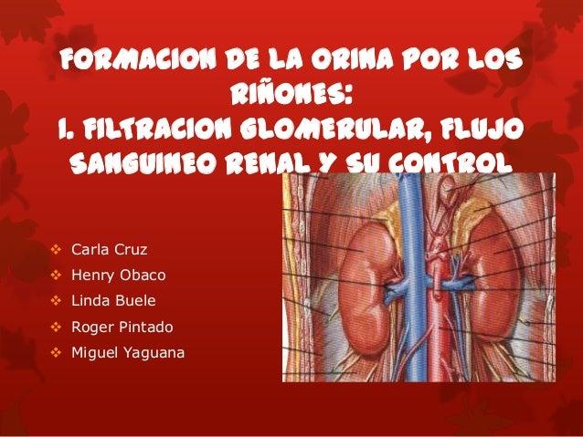 FORMACION DE LA ORINA POR LOS RIÑONES: I. FILTRACION GLOMERULAR, FLUJO SANGUINEO RENAL Y SU CONTROL  Carla Cruz  Henry O...