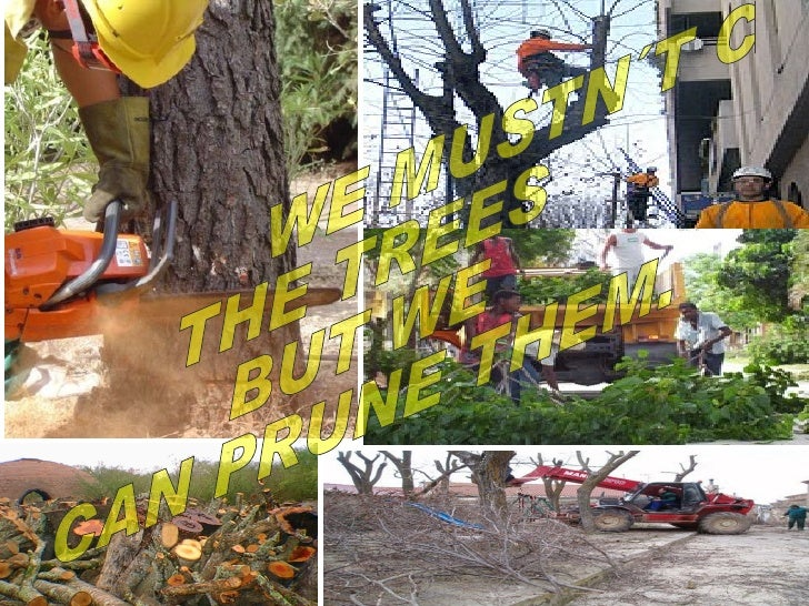 WE MUSTN´T CUT  THE TREES  BUT WE  CAN PRUNE THEM.