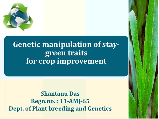 Genetic manipulation of stay-          green traits    for crop improvement            Shantanu Das        Regn.no. : 11-A...