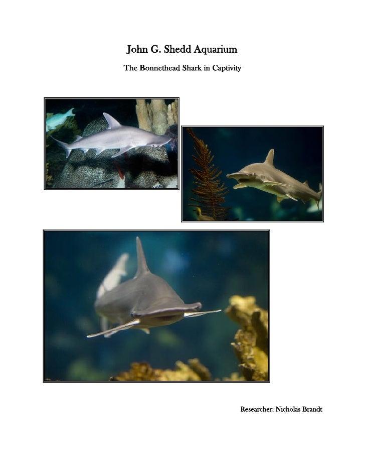 John G. Shedd Aquarium The Bonnethead Shark in Captivity                                     Researcher: Nicholas Brandt