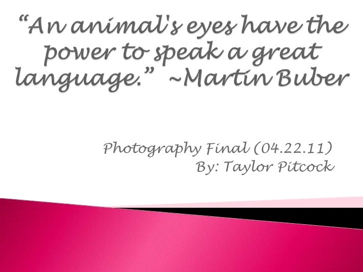 """""""An animal's eyes have the power to speak a great language."""" ~Martin Buber<br />Photography Final (04.22.11)<br />By: Tay..."""