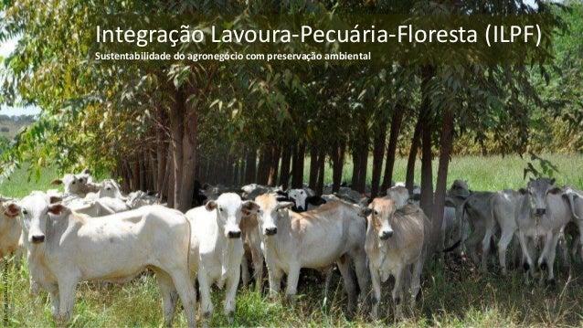 Integração Lavoura-Pecuária-Floresta (ILPF) Sustentabilidade do agronegócio com preservação ambiental 1 SígliaReginaSouza/...