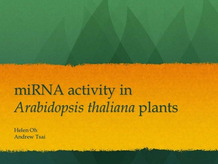 miRNA Activity in Arabidopsis thaliana