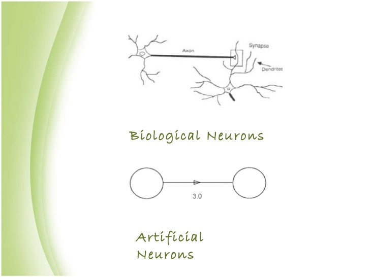 Biological Neurons Artificial Neurons