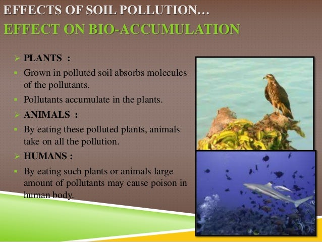 an essay on soil pollution Next, compared to thier knowledge of air pollution,the lebanese are not so familiar with soil pollution it is still an important factor that risks.