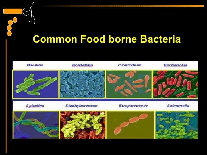 pathogenic bacteria in food