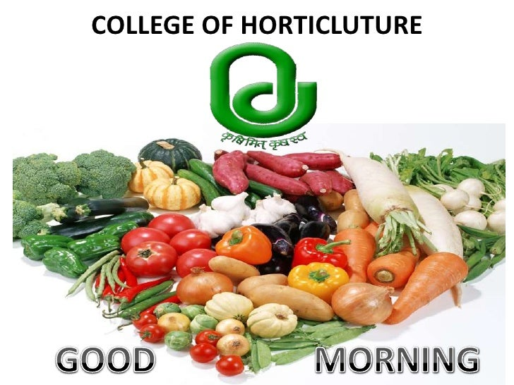 COLLEGE OF HORTICLUTURE<br />GOOD                  MORNING<br />