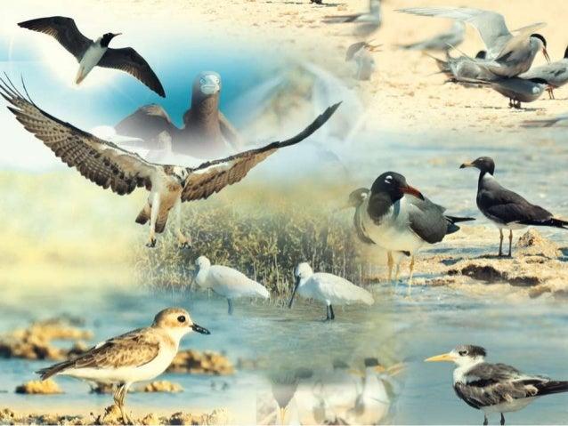 ورقة علمية: الطيور البحرية لمنطقة تبوك