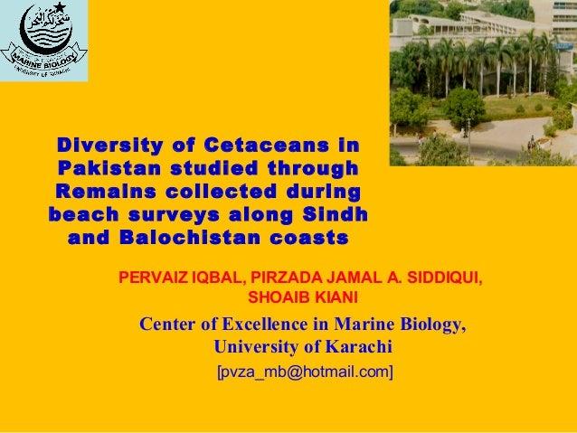 Diversity of Cetaceans inPakistan studied throughRemains collected duringbeach surveys along Sindhand Balochistan coastsPE...