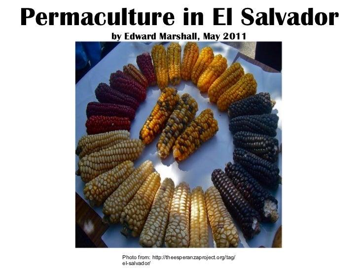 Permaculture in El Salvador