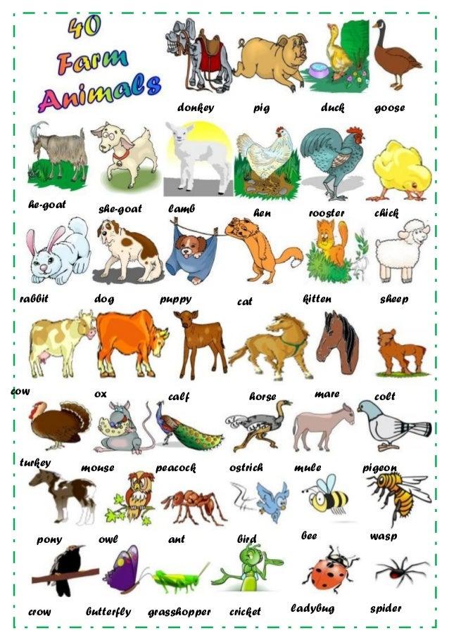 Essays on animals for kids