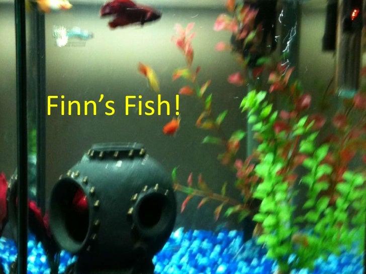 Finn's Fish!