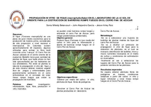 Resumen: El fique (Furcraea macrophylla) es una plana de gran interés económico para la producción de materia prima, consi...