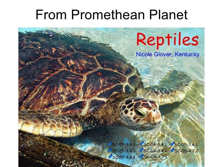 First Grade Reptiles
