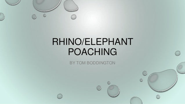 RHINO/ELEPHANT POACHING BY TOM BODDINGTON