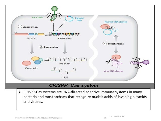 cas 9 and crispr systems mechanisms and applications Exciting breakthroughs in understanding the mechanisms of the crispr-cas system  of the crispr-cas systems (9,  applications related to the use of crispr.