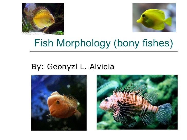 Fish Morphology (bony fishes) By: Geonyzl L. Alviola