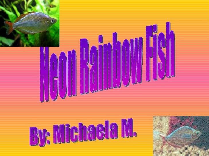 Neon Rainbow Fish By: Michaela M.
