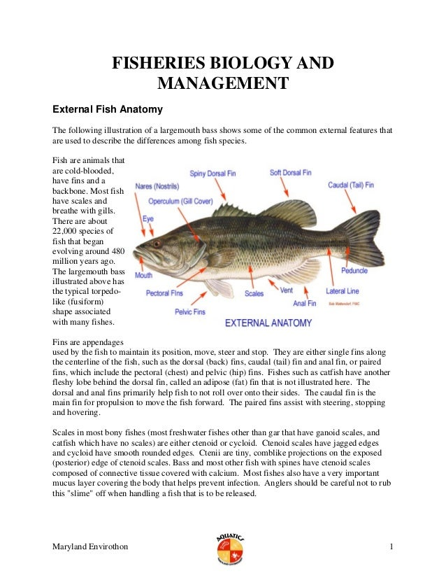 FISHERIES BIOLOGY ANDMANAGEMENTExternal Fish AnatomyThe following illustration of a largemouth bass shows some of the comm...