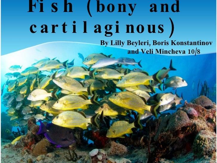 Fishes boris veli lilly 10-8
