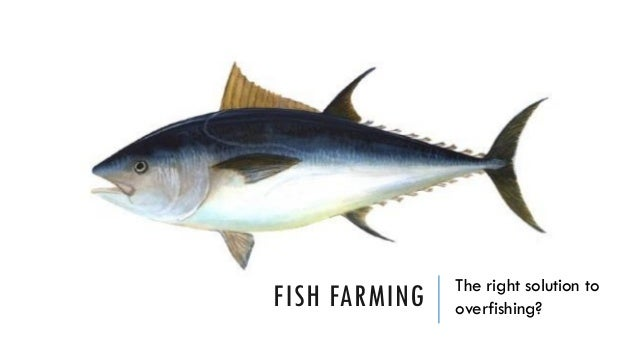 FISH FARMING The right solution to overfishing?