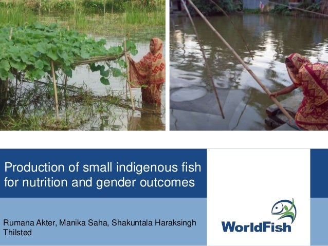 Production of small indigenous fish for nutrition and gender outcomes Rumana Akter, Manika Saha, Shakuntala Haraksingh Thi...