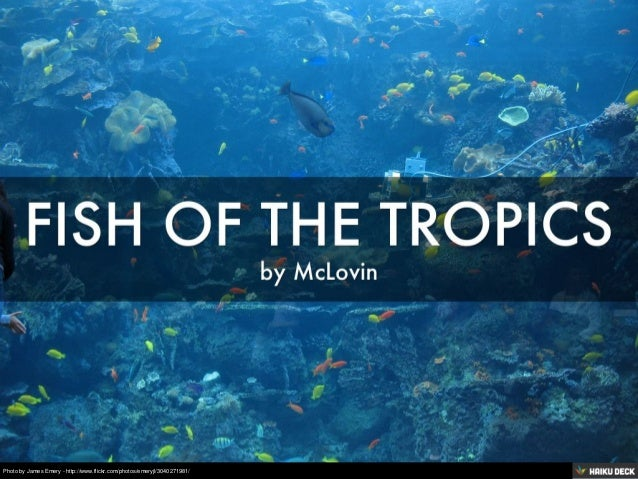 Fish of the tropics