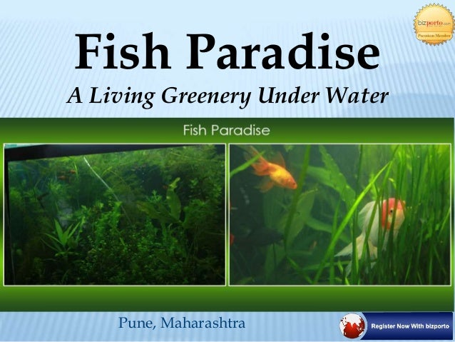 Pune, Maharashtra Fish Paradise A Living Greenery Under Water
