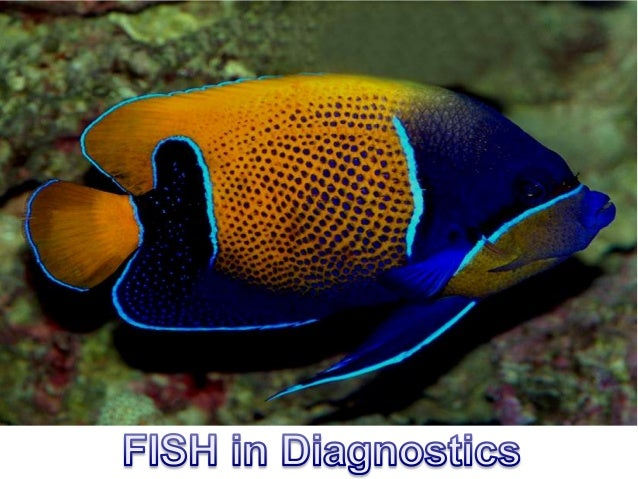 FISH Targets - Metaphase Chromosomes - Interphase Nuclei - Fixed Tissues - Cells in culture
