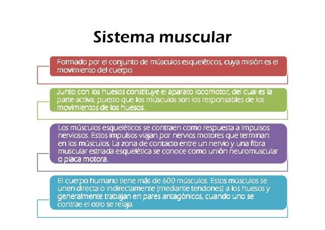 Sistema muscularFormado por el conjunto de músculos esqueléticos, cuya misión es elmovimiento del cuerpo.Junto con los hue...