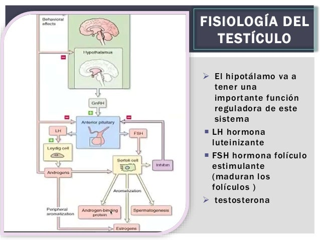 TESTICULOS Y OVARIOS FISIOLOGIA