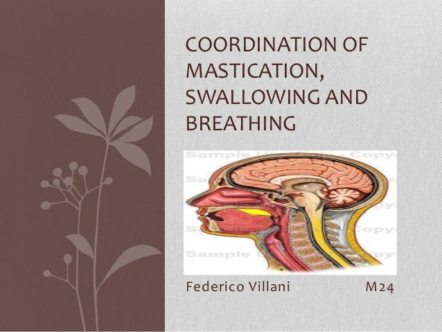 COORDINATION OF MASTICATION, SWALLOWING AND BREATHING  Federico Villani  M24