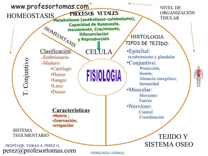 FISIOLOGIA ANIMAL : PROCESOS VITALES Metabolismo (anabolismo-catabolismo), Capacidad de Respuesta, movimiento, Crecimiento...