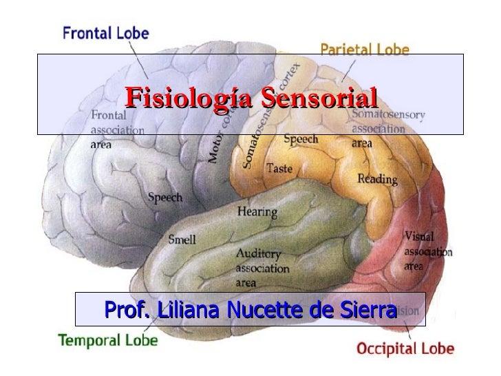 Fisiología Sensorial Prof. Liliana Nucette de Sierra