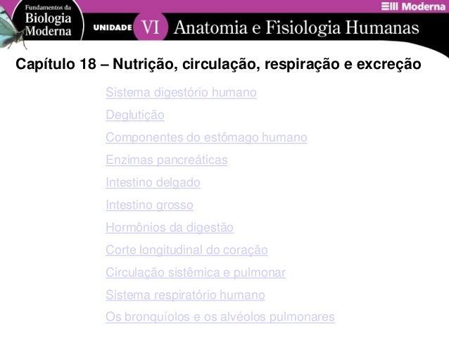 Sistema digestório humanoDeglutiçãoComponentes do estômago humanoEnzimas pancreáticasIntestino delgadoIntestino grossoHorm...