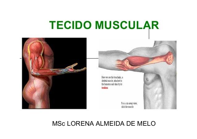 TECIDO MUSCULAR  MSc LORENA ALMEIDA DE MELO