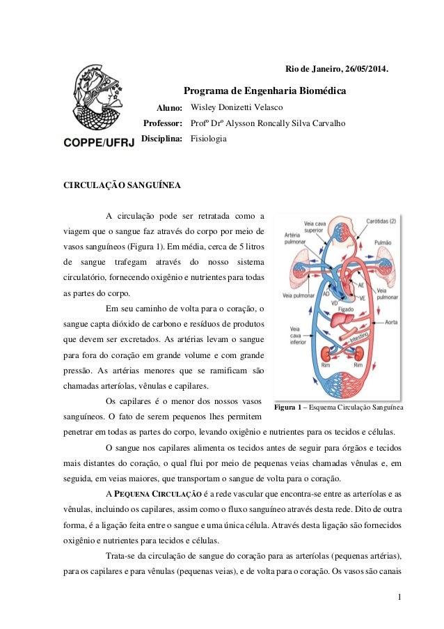1 Rio de Janeiro, 26/05/2014. Programa de Engenharia Biomédica Aluno: Wisley Donizetti Velasco Professor: Profº Drº Alysso...