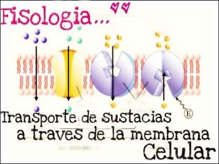 Barrera lipidica y proteínas de transporte de la membrana             celular • La membrana celular esta constituida   por...