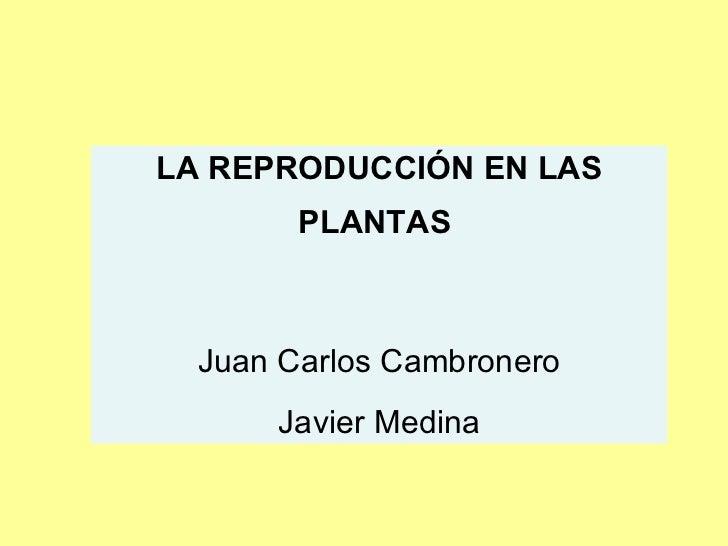 LA REPRODUCCIÓN EN LAS PLANTAS   Juan Carlos Cambronero Javier Medina