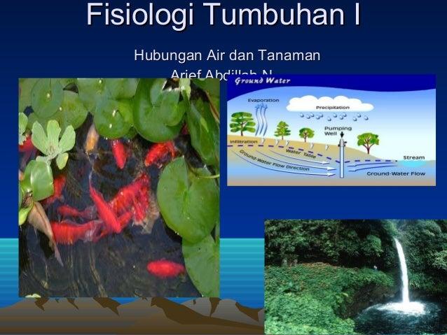 Fisiologi Tumbuhan I   Hubungan Air dan Tanaman       Arief Abdillah N.