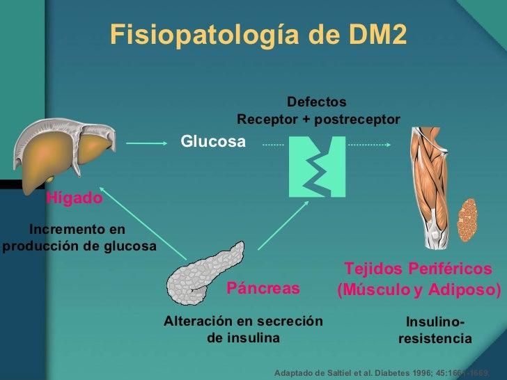 Fisiopatologia Diabetes Mellitus 2