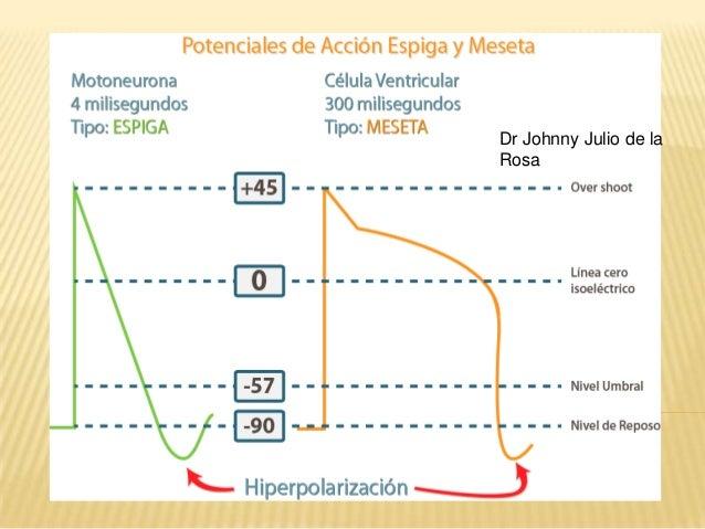 Fisiologia Cardiaca - Generalidades y Ciclo Cardiaco