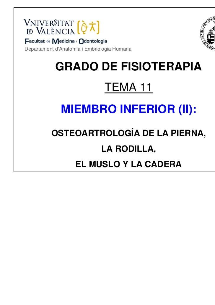 Departament d'Anatomia i Embriologia Humana            GRADO DE FISIOTERAPIA                                TEMA 11       ...