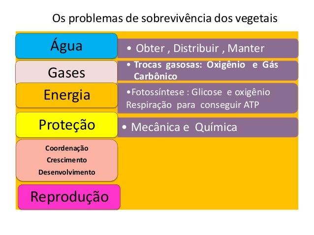 Os problemas de sobrevivência dos vegetais • Obter , Distribuir , ManterÁgua • Trocas gasosas: Oxigênio e Gás CarbônicoGas...