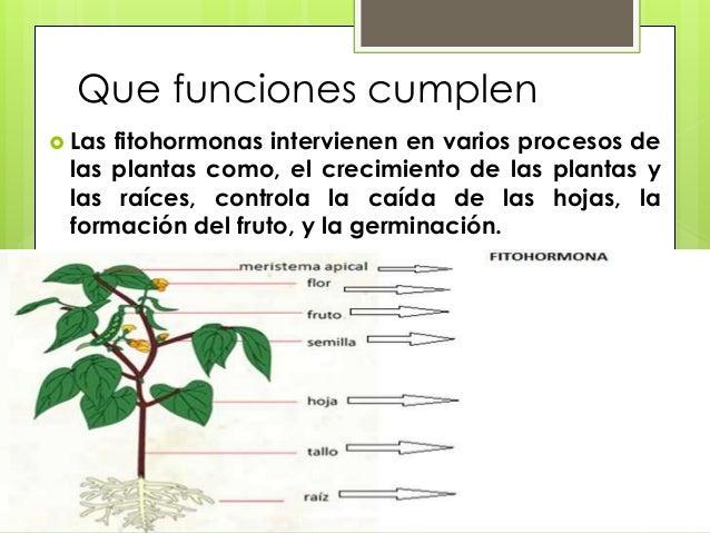 funciones cumplen las fitohormonas intervienen en varios procesos de