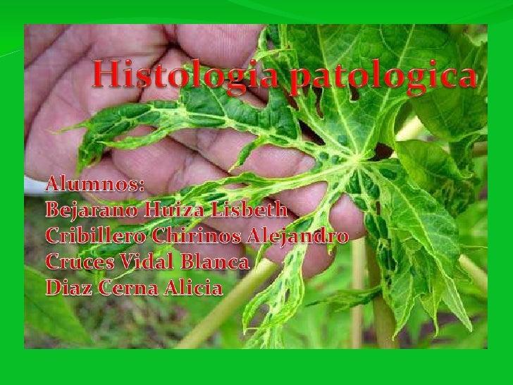 Histologiapatologica<br />Alumnos:<br />Bejarano HuizaLisbeth<br />Cribillero Chirinos Alejandro<br />Cruces Vidal Blanca<...