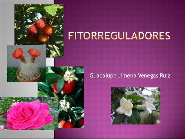 Guadalupe Jimena Venegas Ruiz