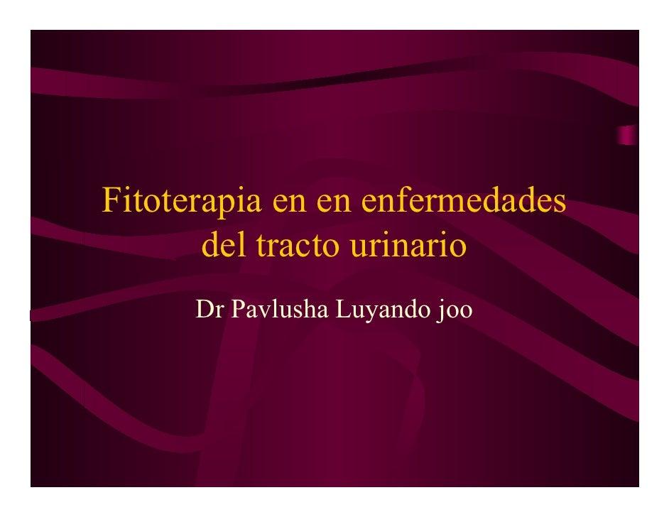 Fitoterapia en en enfermedades        del tracto urinario       Dr Pavlusha Luyando joo