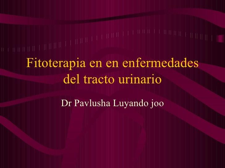 Fitoterapia En En Enfermedades Del Tracto Urinario